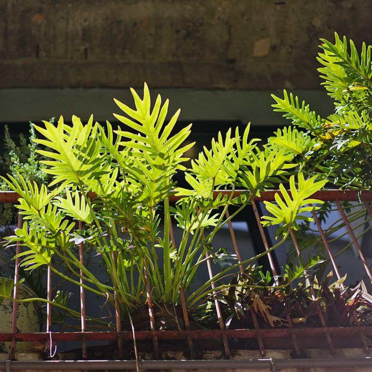 台南 kokoni Green